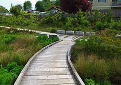 Seattle Urban Landscape: Madison Valley Stormwater Park