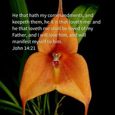 He that hath my commandments, and keepeth them, he it is that loveth me: and he that loveth me shall be loved of my Father, and I will love him, and will manifest myself to him. John 14:21 (KJV)