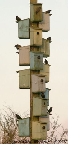 Post loaded with birdhouses