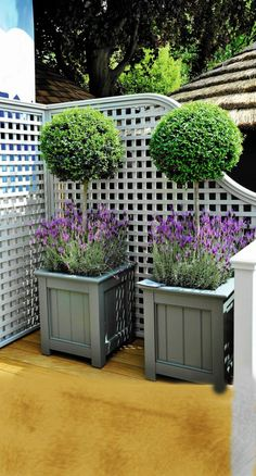 lavender and boxwood BoxwoodLandscape is part of Boxwood landscaping - Boxwood Landscaping, Boxwood Garden, Pergola Garden, Garden Shrubs, Front Yard Landscaping, Garden Planters, Boxwood Planters, Boxwood Tree, Boxwood Topiary
