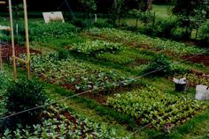 Biointensive Gardening. A very comprehensive page of info regarding this gardening technique without having to read the book.