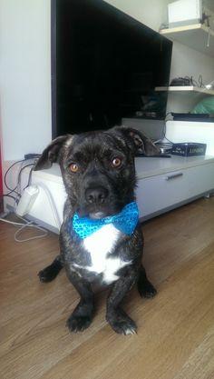 En TOP DOG buscan al mejor perro de España. ¡Ayúdame con tu voto a ganar más de 1.000€ en premios para mi peludo! ¡Tú también puedes participar!
