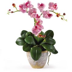 Nearly Natural Triple Mini Phalaenopsis Silk Flower Arrangement ($50) ❤ liked on Polyvore featuring home, home decor, floral decor, flowers, plants, fillers, backgrounds, nature, fake flowers and miniature silk flowers