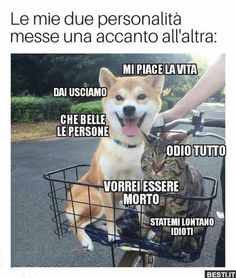Verona, Funny Test, Haha, Corgi, Funny Quotes, Fandoms, Memes, Animals, Kawaii