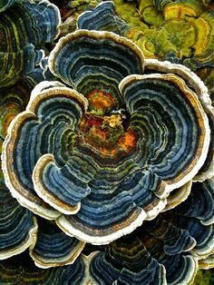 Tree fungus (beautiful colors)