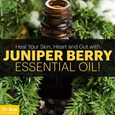 Juniper Berry Essential Oil Relieves Bloating,Skin Problems