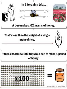How many bees does it take to make a pound of honey? - Groennfell Meadery Blog