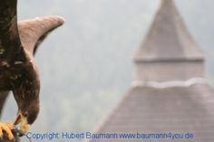 Unter Falken, Adlern und Geiern Animals, Falcons, Vulture, Rv, Animales, Animaux, Animal, Animais