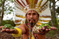 The Legend of Kambo, the paje shaman meets the kambo frog. Spirit Animal, Medicine, Animals, Image, Paganism, Origins, Cleanse, Spirituality, Healing