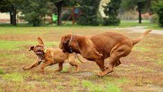 NEW YORK – Niektoré psy sú inteligentnejšie a iné menej. Psychológ Stanley Coren vo svojej knihe The Inteligence of Dogs opísal psie plemená podľa inteligencie.