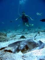 Snuba on St. Thomas $74 pp with entrance to Coral World