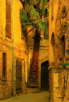 Hidden palm tree on the streets of Kyrenia, Cyprus (by mavi.masmavi).