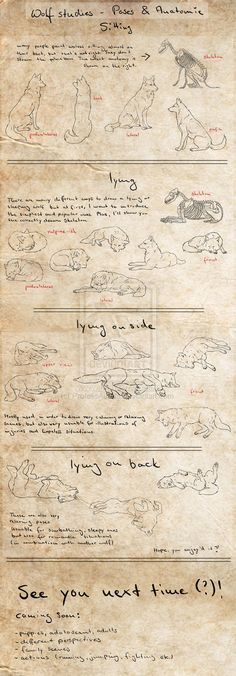 Canine Tut - Basic Poses P.1 by *ProfelisAurata on deviantART