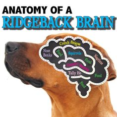 Terrier brains are not much different.