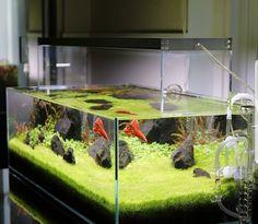 Another stunning aquarium setup by @southbayaqua