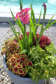 Květináče osázení