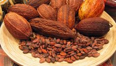 Best producer of cocoa beans in Ghana.  http://www.asanduff.com/gyarko-farms/  #cocoabeans #cocoaghana #cocoafarms