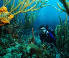 Scuba Diving at The Indians, British Virgin Islands with Oceano Vivo Project