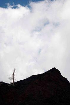 21  Etna, versante nord, Linguaglossa, Sicilia - foto di Isa Nuovo