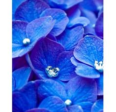 lovely blue ☺️