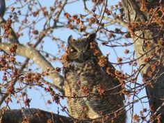 choose joy [owl] www.beingbrave.faith