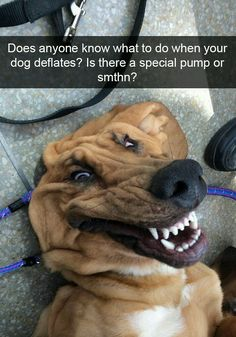 funny dogs with captions . funny dogs and cats . funny dogs make me laugh Funny Animal Jokes, Funny Dog Memes, Funny Animal Videos, Cute Animal Humor, Animal Fun, Dog Videos, Videos Funny, Cute Funny Dogs, Cute Funny Animals