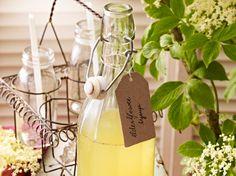 Holunder-Rezepte mit Blüten und Beeren