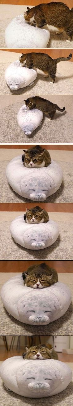 Funny Cute Cats, Cute Cats And Kittens, Cute Funny Animals, Funny Animal Pictures, Cute Baby Animals, I Love Cats, Kittens Cutest, Animals And Pets, Cute Little Things