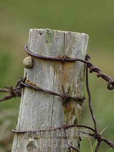 old wood fence - Bing Images