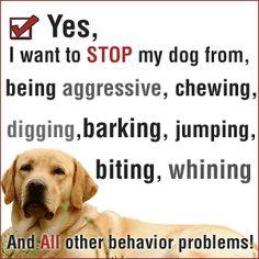 "Say ""YES"" to a better training for your dog. #PetclubIndia #DogTrainingIndia"