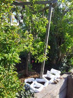 Die erste Batterie wächst unter einem Birnbaum, aber mit Blick zur Sonne.