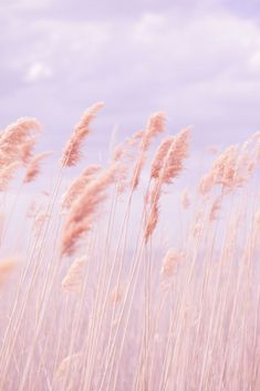 Dreamy Pastel Beach Grass is part of Trendy wallpaper Pink Poppy Photography is all about sharing love, peace and happiness through free creative commons licensed imagery Please help by spreading - Image Pastel, Poppy Photography, Nature Photography, Aesthetic Photography Pastel, Photography Flowers, Fashion Photography, Dreamy Photography, Summer Photography, Photography Tips