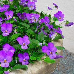 Algunas de las mejores flores de primavera