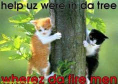 Funny Animal Pictures With Captions - Very Funny Cute Cats Stuck In A Tree Who To Call For Rescue -