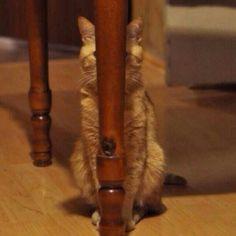 Gato envergonhado