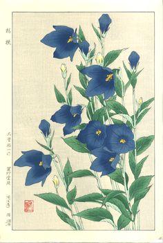 Osuga Yuich - F179 Kikyo (Japanese bellflower)