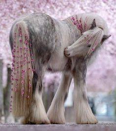 Cute Baby Horses, Big Horses, Horse Love, Most Beautiful Horses, Pretty Horses, Animals Beautiful, Miniature Horse Barn, Cavalo Wallpaper, Casa Anime