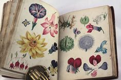 wonderful antique botanical manuscript illustrated with original water colours dated 1823