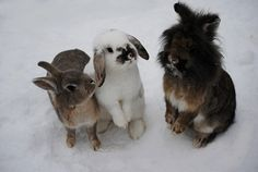 A world of Bunnies