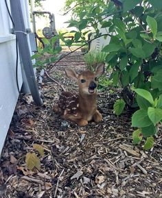 Found this little guy sitting outside my front door this morning