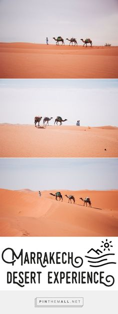 Camels in Morocco - Marrakech Desert Experience