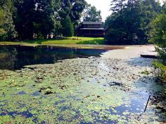 (704) 816-0526 - Charlotte NC - (864) 381-7663  Greenville SC - Asheville- Algae & Aquatic Weeds. Platinum Ponds and Lake Management. #pondmanagement eurasion watermilfiol, hydrilla/ elodea, naiad, sage pondweed, american pondweed, cattails, duckweed, southeastern pond management, south east pond management, fish pond management, farm pond management, lake pond management, large pond management, pond maintenance. Swamped with Watershield?