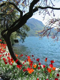 Lake Como, Switzerland/Italy