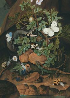 Johann Falch - Forest floor with a snake, lizard, butterflies, and snails amongst weeds on a riverbank - before 1727 -