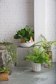 Indoor Plants Summer 2016 - Domayne Australia