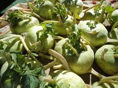 Two recipes for canning Kohlrabi