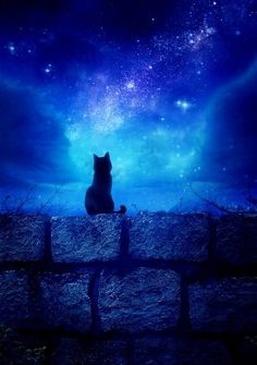 The black cat in the night! Warrior Cats, Crazy Cat Lady, Crazy Cats, Stuffed Animals, I Love Cats, Cute Cats, Animal Gato, Here Kitty Kitty, Belle Photo