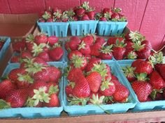 Local (Apex) farm with PYO strawberries, blueberries, plus homemade ice cream and animals to see. Blueberries, Strawberries, Meat Farms, Strawberry Farm, Homemade Ice Cream, Buckwheat, Fruit, Animals, Food