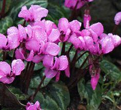 Wonderful Flowers, Gardening, Plants, Garten, Flora, Plant, Lawn And Garden, Planting, Horticulture
