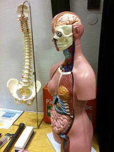 manekin medyczny/medical mannequin
